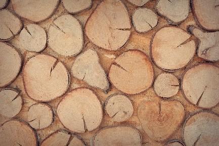 B2B-Handel: Holz-Fachgroßhandel
